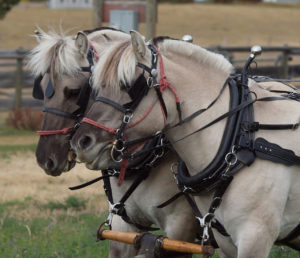 horse driving lessons