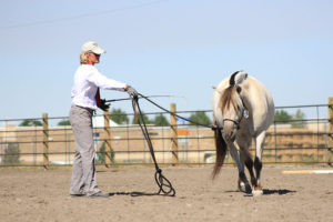 training a therapy horse